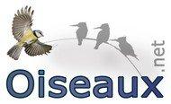 Guides et livres des oiseaux