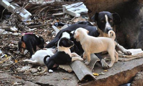 Pétition : Pour le sauvetage d'une vingtaine de chiens