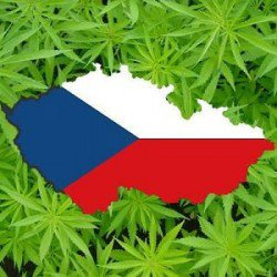 Medicinal cannabis now on sale in Czech pharmacies