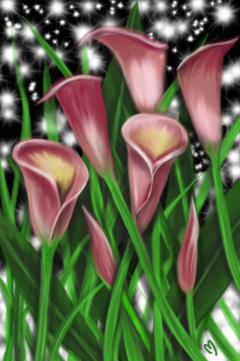 Calla Lily Night