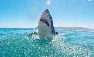 Observations des requins: L'urgence de poser un cadre éthique pour mettre fin aux dérives