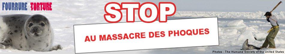 Stop à la Chasse aux Phoques ! - Pétition