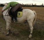 Ma perle rare, mon poney. ♥