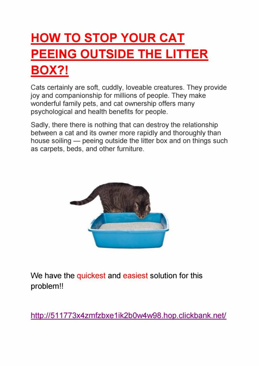 VET Reveals How to Stop Your Cat Peeing Outside the Litter Box PERMANENTLY!