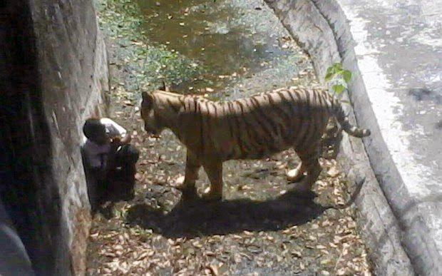 Tiger mauled to death a young man in a New Delhi zoo (India) | Mai Jaha Jata Hoon Chha Jata Hoon