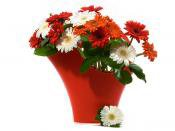 Send Christmas Flowers , Xmas Flowers Delivery to UK