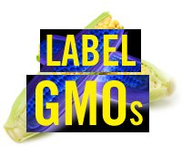 Tell Retailers: Label Monsanto's GMO Sweet Corn