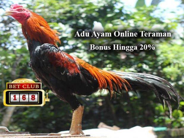 Judi Sabung Ayam Online Bonus Deposit Terbesar 2018