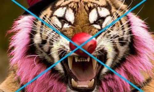 Pétition : Contre la venue de cirques avec animaux sur la commune de Tarbes.