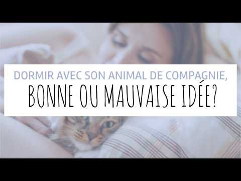 Dormir avec son animal de compagnie, bonne ou mauvaise idée ? | Fourchette et Bikini