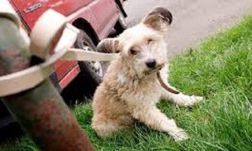 Pétition : De meilleures lois pour les animaux
