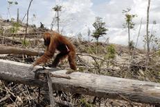 Les dangers de l'huile de palme sur la santé