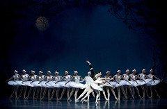 Swan Lake Ballet - schoolanduniversity.com
