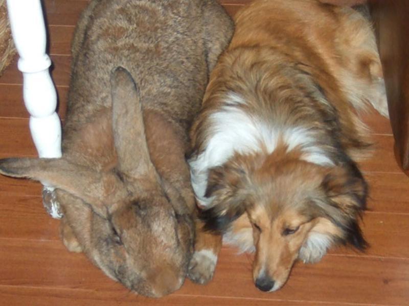 Josie, Bugs Bunny vient de bouffer Grominet !