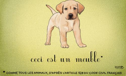 Pétition : Pour que les animaux obtiennent une réelle existence dans le code civil!