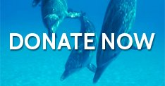 Take Action: Take the Pledge Not to Buy a Ticket to a Dolphin Show | Ric O'Barry's Dolphin Project