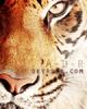 Blog Animalier