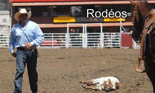 Pétition : Rodéos : torturer les animaux pour le plaisir !