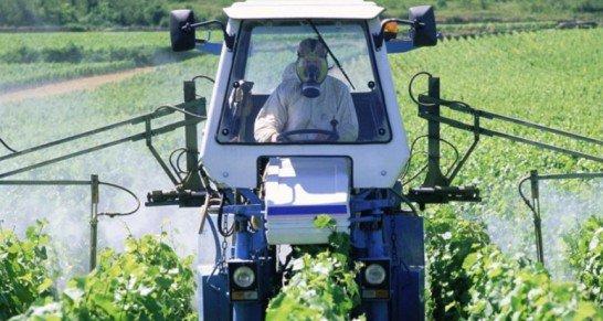 Le Sénat rejette l'interdiction des pesticides néonicotinoïdes - Agence Info Libre