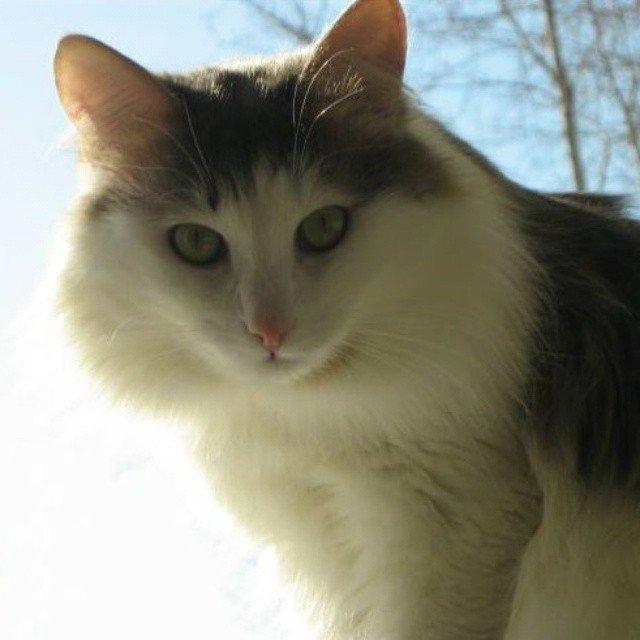 Наш кот Мурзик