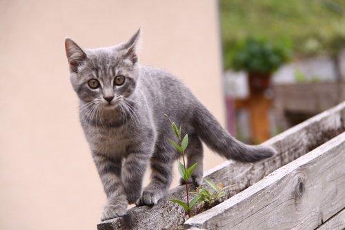 Nouvelles disparitions de chats à Saint-Pierre-de-Féric
