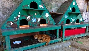 Pétition : Des abris pour les chats errants