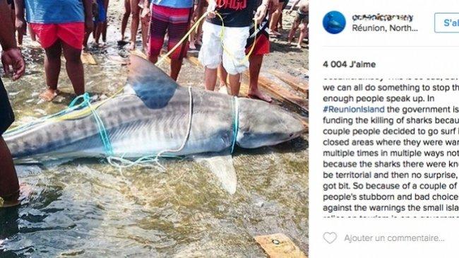 """Une célèbre plongeuse vient de partager l'image avec ses milliers d'abonnés et dénonce """"le meurtre"""" des squales : La photo d'un requin tué à La Réunion fait le tour du Web"""
