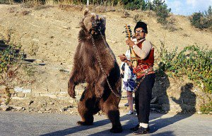 Rescue Bears from Abusive Circus