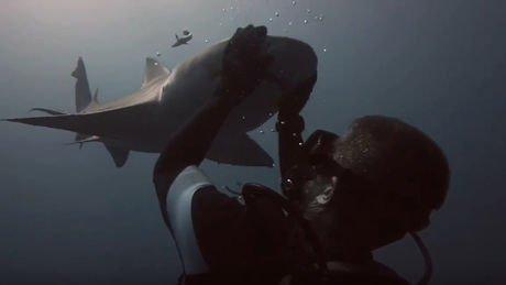 A chaque plongée au large des côtes de Jupiter, en Floride, Randy Jordan reçoit la visite de Blondie, un...