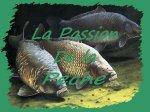 la passion de la peche .::. forum dedier à tous les passionner de peche , en no kill
