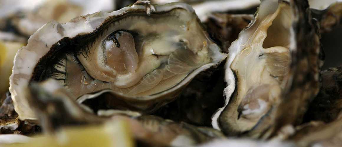 Noël : la belle découverte d'un jeune homme dans une huître le soir du réveillon !
