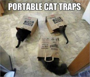 Second Best Cat Trap (after Boxes)