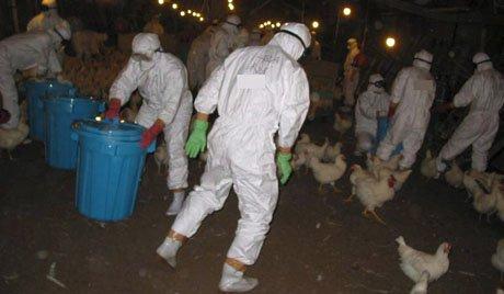 Shanghai ferme ses marchés aux volailles à cause de virus H7N9