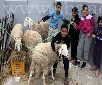 Sidi Bel Abbès :A moins d'une semaine de l'Aïd El Adha Très cher le mouton.