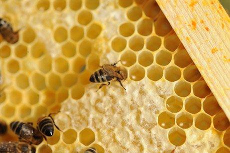 La vie des abeilles - Abeille en danger - Adopter des abeilles