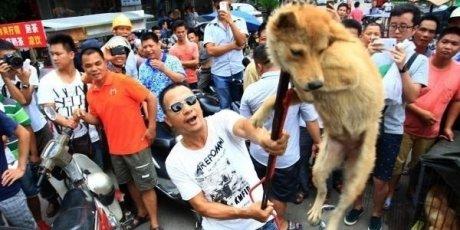 Arrêtons le massacre de chiens