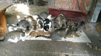 ACTU Animaux - 35 chats en danger, les sauver avant le 12 novembre