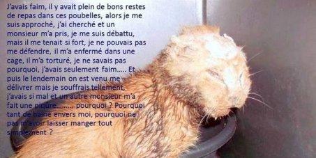 Un chat torturé à la soude caustique -- non à l'impunité!