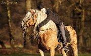 Cheval est poney