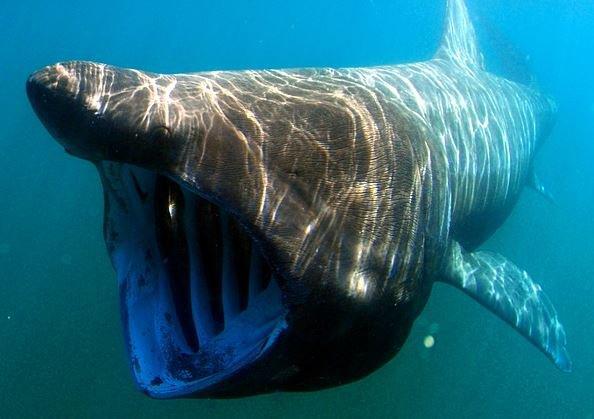 Le génocide silencieux des requins