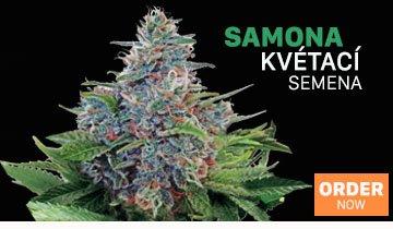 Semena Marihuany, Semena Konopí - Ministry of Cannabis