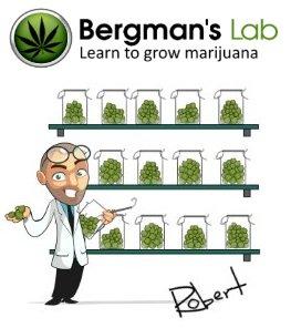 Robert Bergman's Lab
