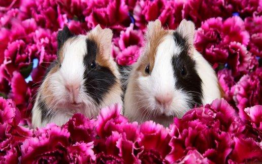 Cute beautiful rabbit wallpapers desktop Wallpapers 3925