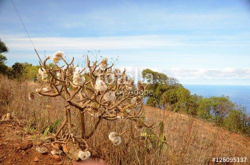"""""""Randonnée aux alentours du village de Don Pedro"""" photo libre de droits sur la banque d'images Fotolia.com - Image 126095137"""