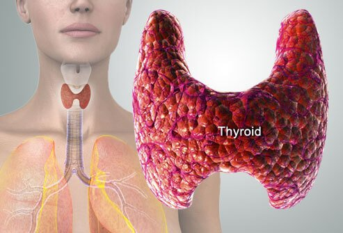 This Surprising Imbalance May Be Causing All Your Thyroid Problems - Healthy Food Society
