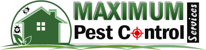 Home » Pest Control Service - Bedbugs Removal Services - Rodents Pest Control. Pest Control Service – Bedbugs Removal Services – Rodents Pest Control.