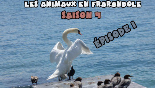 les animaux en farandole: saison 4: épisode 1 - Vidéo dailymotion