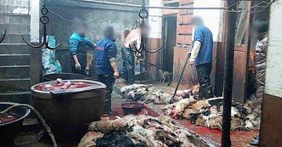Des chiens tabassés et tués dans l'industrie du cuir - Animal Monde