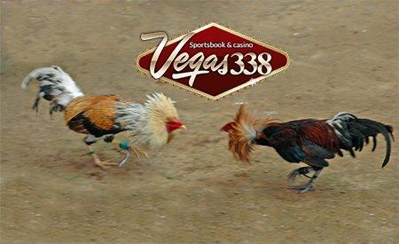 Tips Menang Taruhan Adu Ayam