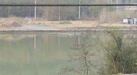 Les sangliers traversent la Meuse